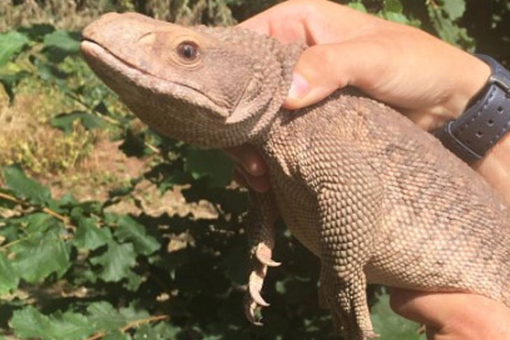 Lizard Tale Has Happy Ending Exeter City Council News